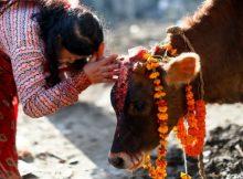gai puja - Must Visit Nepal